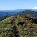 Adams, Rainier, and my Ultimate Hiking Dog