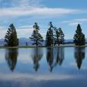 Trees on sandbar on Yellowstone Lake