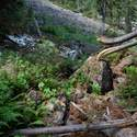 Avalanche debris near Goat Creek