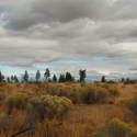 Fall color in the high desert