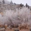 Freezing fog on Deschutes River