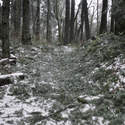 Pine needles all over the trail from the storm. The trail smelled great! (By this point, my camera was fogging up pretty bad)
