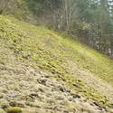 6 inch mosses on scree field